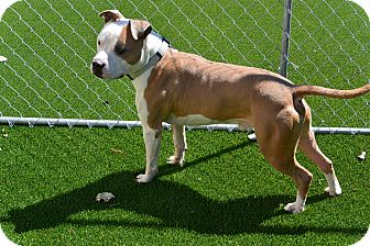 Mixed Breed (Medium) Mix Dog for adoption in Meridian, Idaho - Dexter