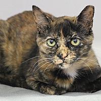 Adopt A Pet :: Flynn - Dunkirk, NY