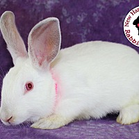 Adopt A Pet :: Rhubarb - Wilmington, NC