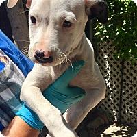 Adopt A Pet :: Ruth - Santa Ana, CA