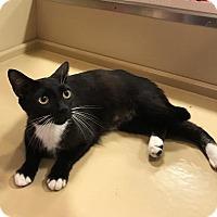 Adopt A Pet :: Snuggle - Oviedo, FL