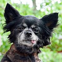 Adopt A Pet :: Lola - Fairport, NY
