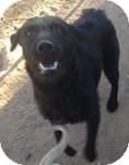 Labradoodle Mix Dog for adoption in East Hartford, Connecticut - Aquarius ADOPTION PENDING