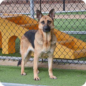 German Shepherd Dog Dog for adoption in Homewood, Alabama - Katie