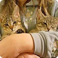 Adopt A Pet :: Kaycee sweetie - Sterling Hgts, MI