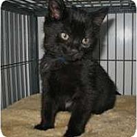 Adopt A Pet :: Leopard - Shelton, WA
