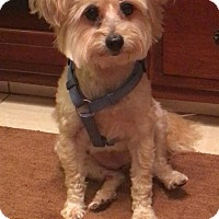 Adopt A Pet :: Izzie ~ Adoption Pending - Youngstown, OH