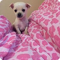 Adopt A Pet :: Moonshine - Bakersfield, CA