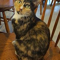 Adopt A Pet :: Nala - St Paul, MN