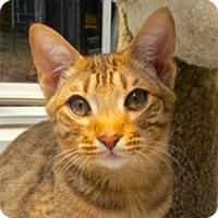 Adopt A Pet :: Cinnamon - Davis, CA