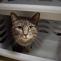 Adopt A Pet :: Anna - Pottsville, PA