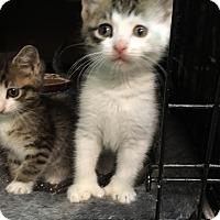 Adopt A Pet :: Turner - East Brunswick, NJ