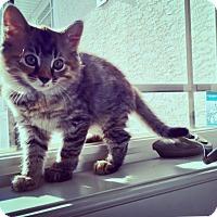 Adopt A Pet :: Arabella & Kittens - Colmar, PA