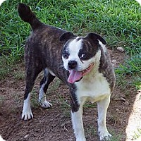 Adopt A Pet :: Scotty Pippin NC - Various Cities in the entire Southeast, TN