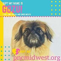 Adopt A Pet :: Gozu - Inver Grove, MN