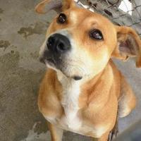 Adopt A Pet :: Annie - North Myrtle Beach, SC