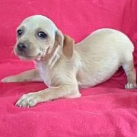 Adopt A Pet :: Hyde - West Springfield, MA