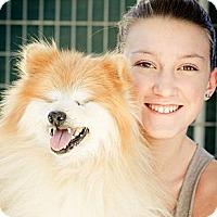 Adopt A Pet :: Madison - Acton, CA