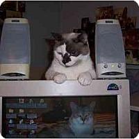 Adopt A Pet :: Bluebelle - Simms, TX
