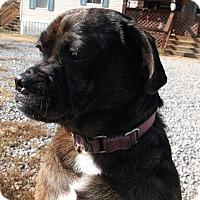 Adopt A Pet :: Prieta - Allentown, PA
