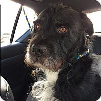Adopt A Pet :: *URGENT* GEORGE - Van Nuys, CA