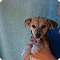 Adopt A Pet :: Noel - Oviedo, FL