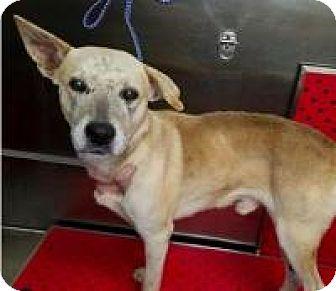 Shepherd (Unknown Type) Mix Dog for adoption in Appleton, Wisconsin - Champ