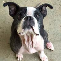 Adopt A Pet :: Available SEVEN - Greensboro, NC