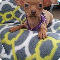 Adopt A Pet :: Georgina - Joshua, TX