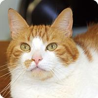 Adopt A Pet :: Yellow - Harrison, NY