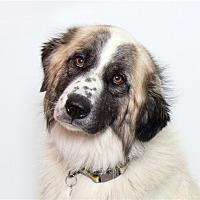 Adopt A Pet :: Boone - San Luis Obispo, CA