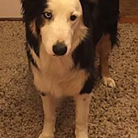 Adopt A Pet :: SAMMY (Courtesy List) - San Pedro, CA