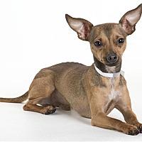 Adopt A Pet :: Bounce - Monterey, CA