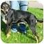 Photo 3 - Shepherd (Unknown Type) Mix Dog for adoption in Osseo, Minnesota - Buddy