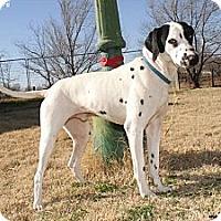Adopt A Pet :: GQ - Newcastle, OK