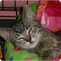 Adopt A Pet :: Little Leo - lake elsinore, CA