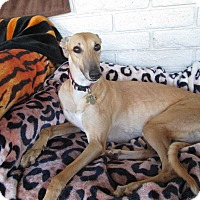Adopt A Pet :: Hera (Strike Zone Hero) - Cottonwood, AZ
