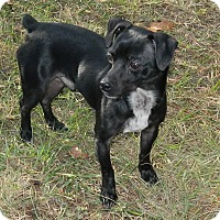 Adopt A Pet :: Hemmi - Umatilla, FL
