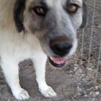 Adopt A Pet :: Petra - Whitewright, TX