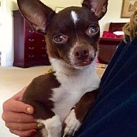 Adopt A Pet :: SassyChi - Alpharetta, GA