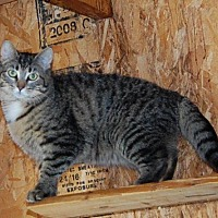 Adopt A Pet :: Stella - Brainardsville, NY