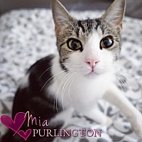 Adopt A Pet :: Mia Purlington - Tampa, FL