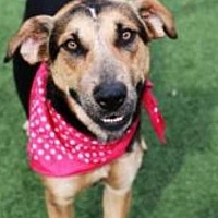 Adopt A Pet :: JoJo - Kansas City, MO