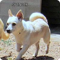 Adopt A Pet :: Spencer - Lindsay, CA