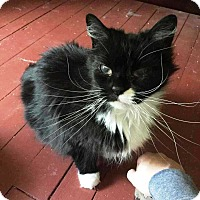 Adopt A Pet :: Puck - Putnam, CT