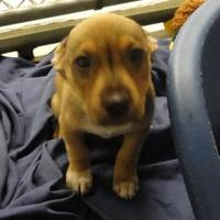 Adopt A Pet :: Branch - Eagle River, WI