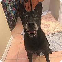 Adopt A Pet :: Tucker - Edgewater, NJ