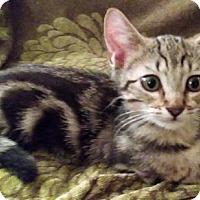 Adopt A Pet :: Stanley - Long Beach, CA