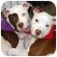 Photo 2 - American Bulldog Mix Puppy for adoption in Marietta, Georgia - Pong