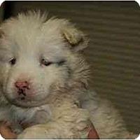 Adopt A Pet :: Savannah - Mesa, AZ